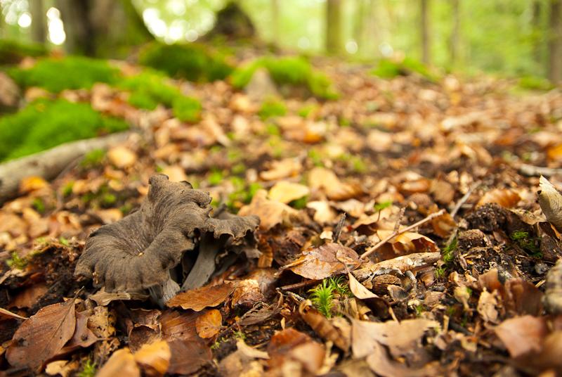 www tenåringer svart com www com bollywood bilder